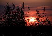 Günbatımı alanında — Stok fotoğraf