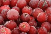 Frozen cranberry. — Stock Photo