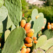 Prickly Pears — Stock Photo #1457644