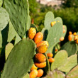Prickly Pears — Stock Photo