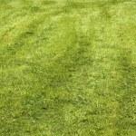 Lawn — Stock Photo #1457958