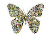 Butterfly — Стоковое фото