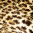 Stock Photo: Leopard fur