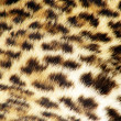 Leopard fur — Stock Photo #1453265
