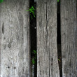Wood grunge — Stock Photo #1453364