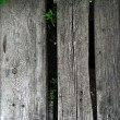 Wood grunge — Stock Photo