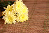 Crisantemo — Foto de Stock