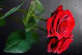 Red rose on mirror — Stock Photo