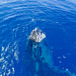 Humpback whale in the ocean — Stock Photo