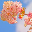 Pretty pink flower with the blue sky — Stock Photo