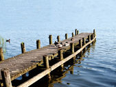 Ducks sitting on a ramp at a lake — Stock Photo