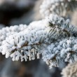Foto Stock: Fir tree brunch with snow
