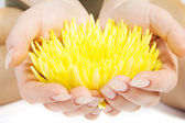 Yellow flower in the woman hands — Stock Photo