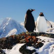 Two penguins dreaming — Stock Photo #1643425