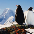 Two penguins dreaming — Stock Photo #1643481