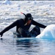 Stock Photo: Diver on the ice