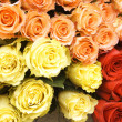 Stock Photo: Bouquet of multi-coloured roses