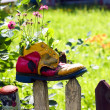 Stock Photo: Old boot in which flowers grow