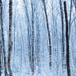 The winter forest before dawn — Stock Photo