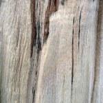 Texture of fibers of tree — Stock Photo #1555958