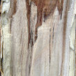 Texture of fibers of tree — Stock Photo #1555976