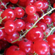 Currant berries - 图库照片