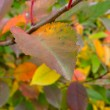 Stock Photo: Autumn leaves on trees