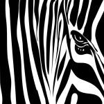 Zebra texture — Stock Vector #1529413