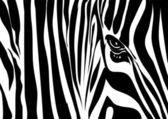 Zebra-textur — Stockvektor
