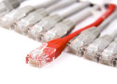 Câble réseau — Photo