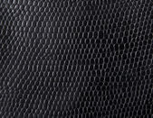 Schlangenleder — Stockfoto
