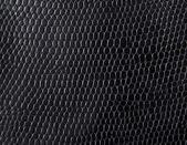 蛇皮肤 — 图库照片