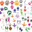 Stock Vector: Paw prints