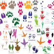 Stockvektor : Paw prints
