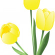 Stock Vector: Yellow Tulips