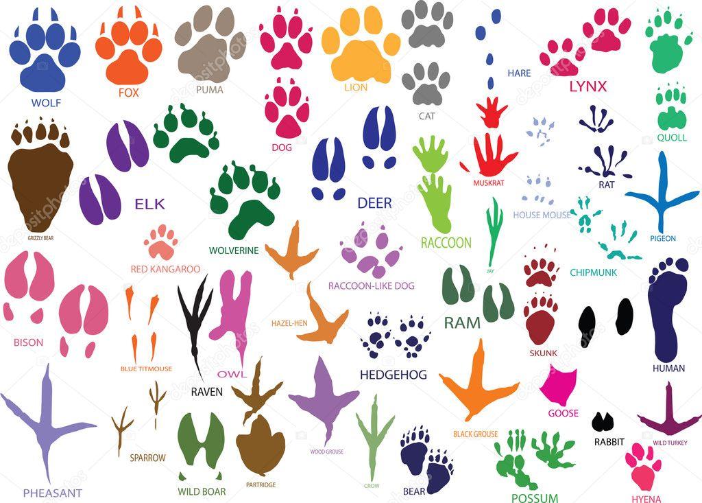 Лапки животных рисунки