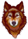 Portrait of the wolf — Stock Vector