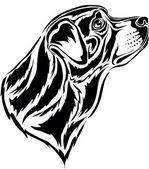 Rottweiler — Stock Vector