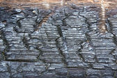 Charred wood — Stock Photo