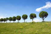 Trees in a line — Stock Photo