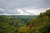 Clouds over forest — Stock Photo