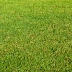 Lawn — Stock Photo #2099843
