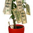 Monetary tree — Stock Photo