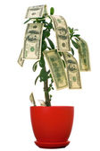 Dollars on the tree — Stock Photo