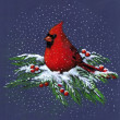Stock Photo: Color Drawing of a Cardinal in Winter