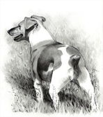 Pencil Drawing of Jack Russell Terrier — Stock Photo