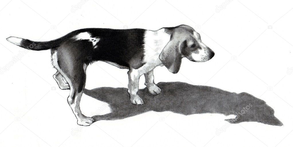 Beagle dog drawing image search results