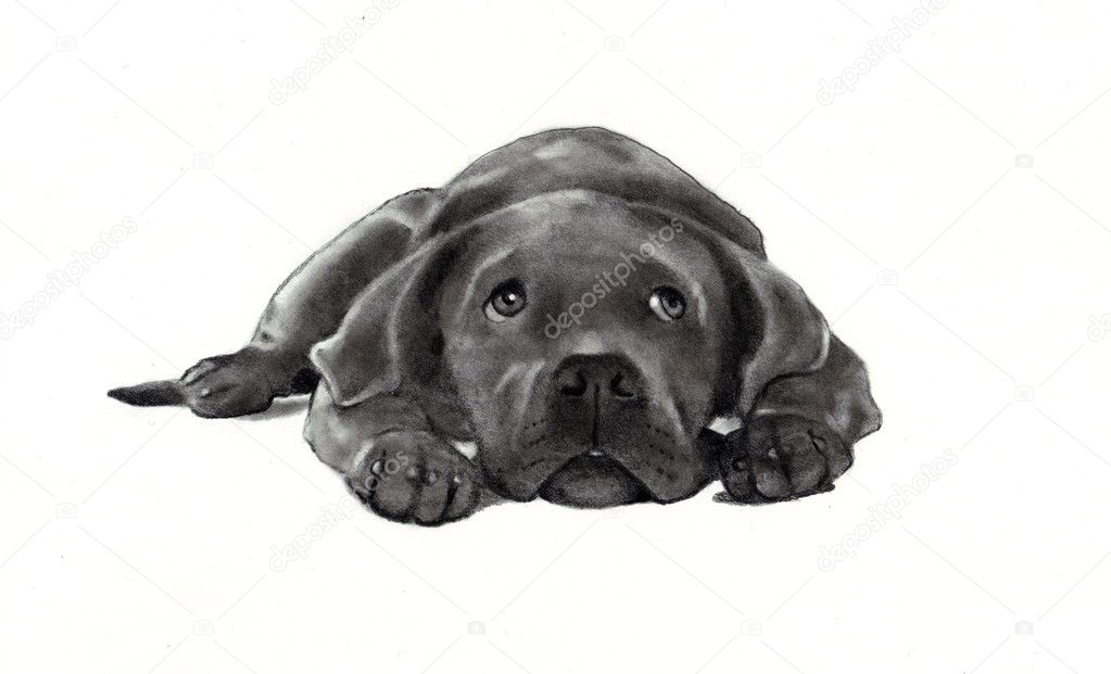 Black dog lying on back - photo#14