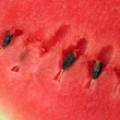 Stock Photo: Ripe water melon