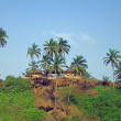 Stock Photo: Lanscape of shacks and palms